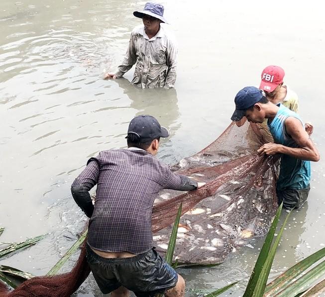 Người dân xã Đa Phước thu hoạch gần 2 tấn cá