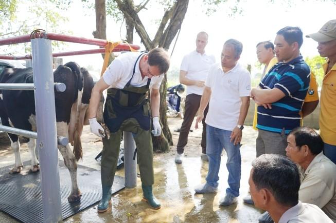 Nông dân Việt Nam-Hà Lan giao lưu chăn nuôi bò sữa