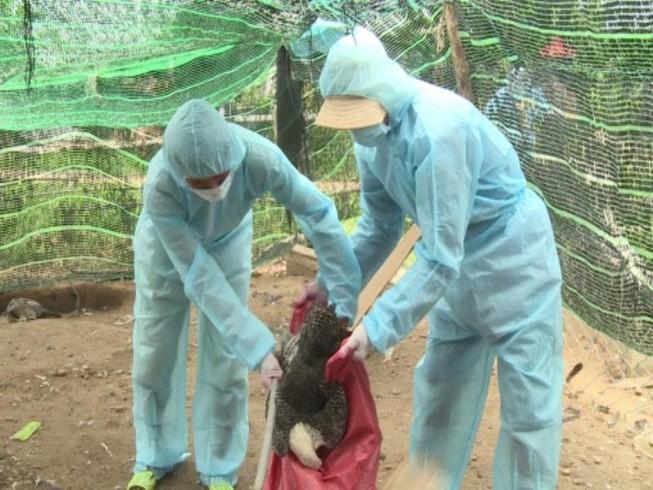 Xuất hiện ổ dịch cúm A/H5N6 độc lực cực mạnh