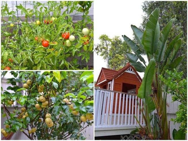 Hồng Ngọc khoe vườn rau tại Mỹ quanh năm ăn chẳng hết