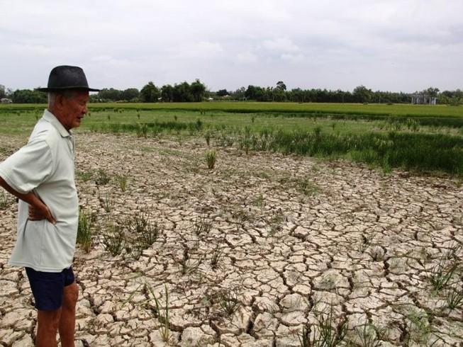 hạn mặn khốc liệt mùa khô 2016 vừa qua gây thiệt hại lớn cho sản xuất lúa vùng ĐBSCL