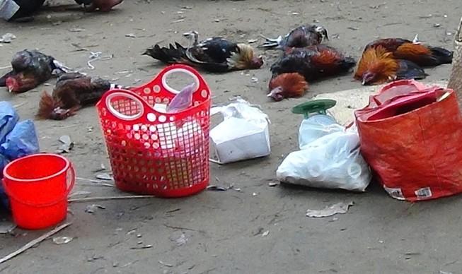 41 người bị bắt giữ tại trường gà ở Rạch Giá