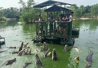 Du khách Trung Quốc điên đảo với dịch vụ câu cá giữa 4.000 con cá sấu