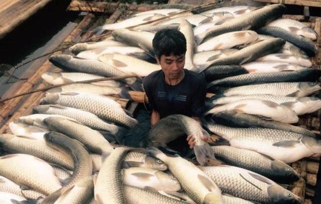 Báo cáo Thủ tướng vụ cá chết trắng ở Thanh Hóa