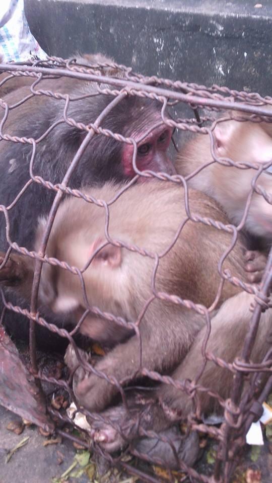 Thanh niên khoe giết khỉ bị điều tra vì nuôi nhốt chim cắt