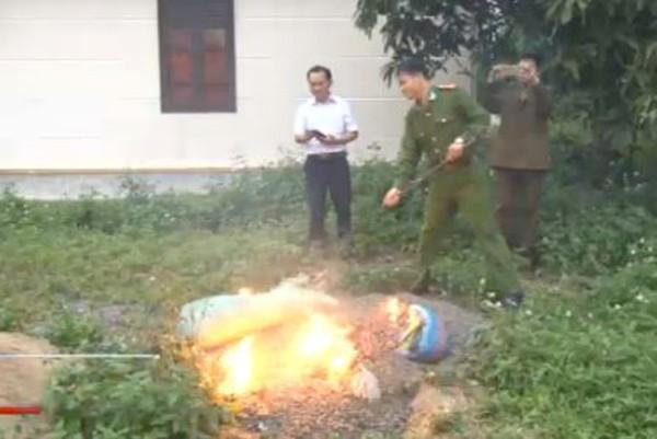Tiêu hủy đốt 350 kg hạt hướng dương Trung Quốc