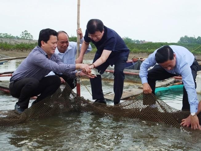 Cá chết ở miền Trung: Xử lý nghiêm nếu xả thải  gây độc