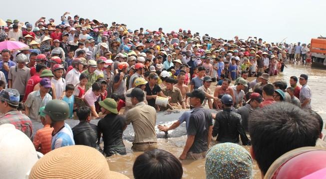 Phát hiện xác con cá voi khoảng 10 tấn trên biển