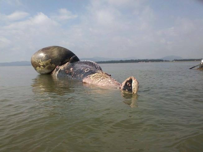 Người dân rưng rưng chờ đưa xác cá voi lên bờ