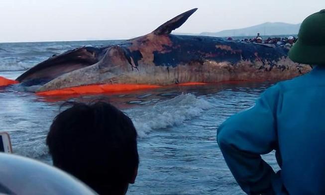 Cả làng mang khăn tang trong lễ an táng cá voi