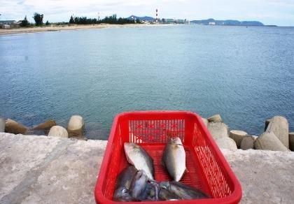 Hà Tĩnh lập hội đồng đánh giá thiệt hại sự cố cá chết do Formosa