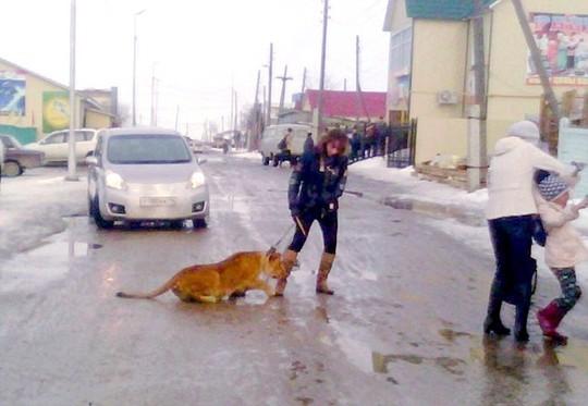 Sư tử cắn bé gái khi được dắt đi dạo trên đường