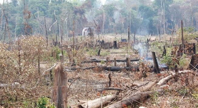Kỷ luật giám đốc công ty bỏ phế rừng cho lâm tặc