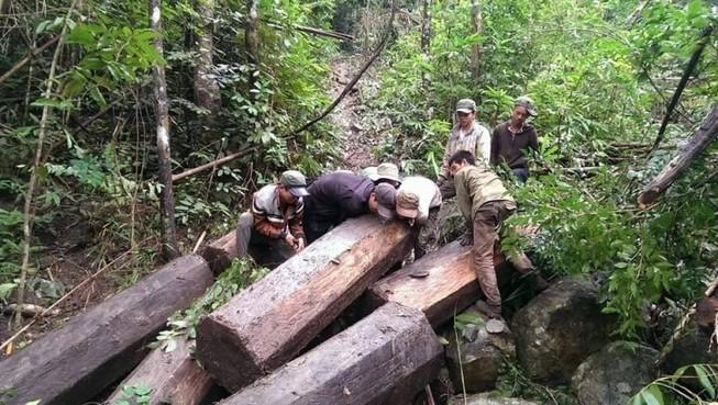 Một lâm tặc bị gỗ đè tử vong khi chạy trốn kiểm lâm