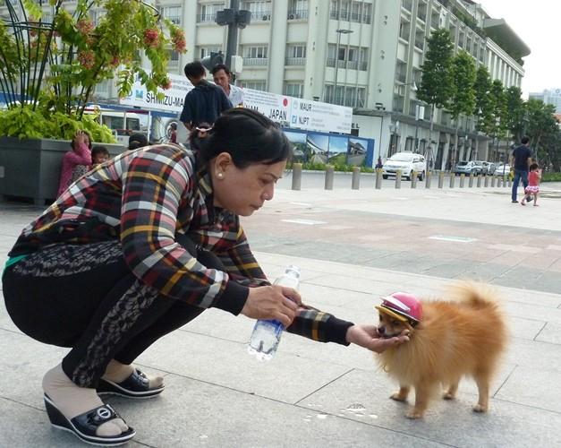 Không cho thú cưng vào phố đi bộ