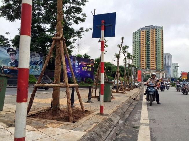 35 cây Lát hoa đầu tiên được trồng mới tại phố Nguyễn Chí Thanh