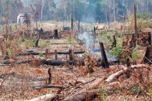 Khởi tố 3 đối tượng hủy hoại rừng
