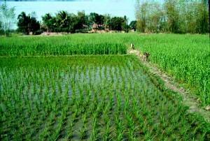 Chém người vì bị… lấy nước trong ruộng