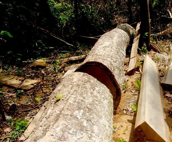 Vụ 'bảo kê' phá rừng: Kiểm điểm giám đốc, đình chỉ ba cán bộ
