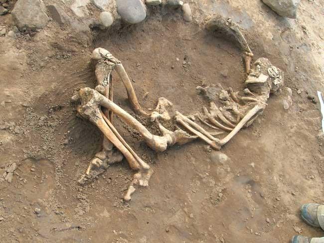 Sửa nhà, phát hiện bộ xương người trên… trần