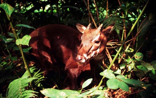 Triển lãm loài thú cổ đại quý hiếm phát hiện ở Hà Tĩnh