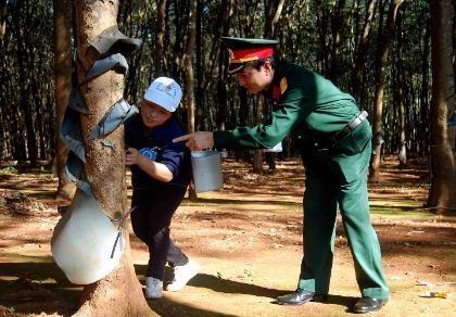 Giám đốc và trợ lý bị truy tố vì phá hàng trăm hecta rừng