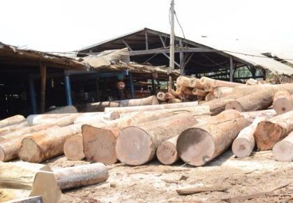 Kỷ luật 4 cán bộ kiểm lâm để doanh nghiệp cất giấu gỗ lậu