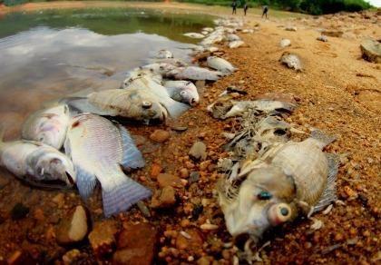 Quảng Nam: Yêu cầu làm rõ nguyên nhân cá chết ở hồ Phước Hà
