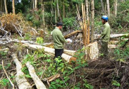 'Lâm tặc' táo tợn trang bị hung khí, ngang nhiên chặt phá rừng