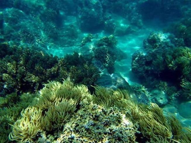 Hải sản miền Trung: Cá bề nổi đã an toàn