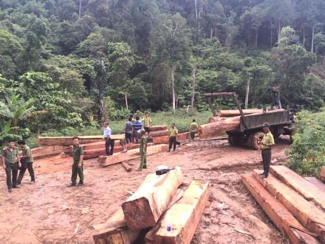 Bắt hơn 35 khối gỗ lậu trong rừng phòng hộ