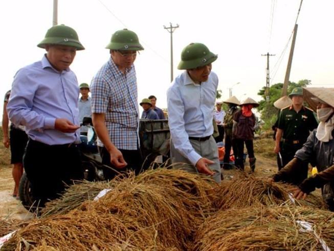 Toàn dân gấp rút gặt sớm cứu lúa trước bão số 7