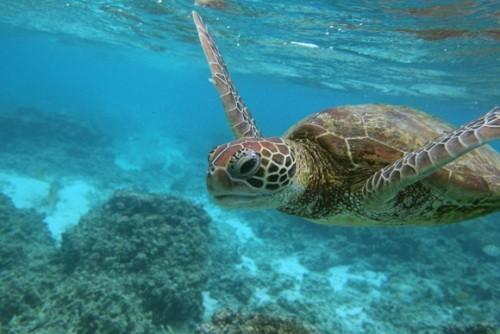 Chung sức bảo vệ đại dương
