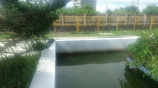 Hệ thống xử lý nước thải nhà máy Coca-Cola VN đạt chuẩn