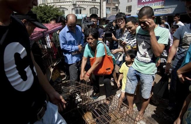Một phụ nữ chi hơn 1.000 USD giải cứu 100 chú chó