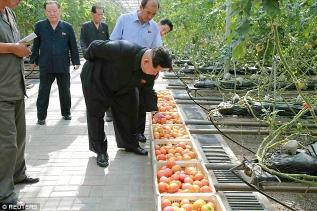 Sợ ngộ độc, Kim Jong-un ra lệnh dùng kính hiển vi kiểm tra rau