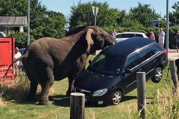 Bị đánh nặng, voi 'nổi điên' tấn công gánh xiếc