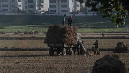 13 triệu người Triều Tiên sẽ 'thiếu ăn' vào 2025