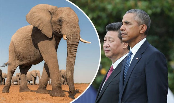 Obama và Tập Cận Bình bắt tay cứu voi châu Phi