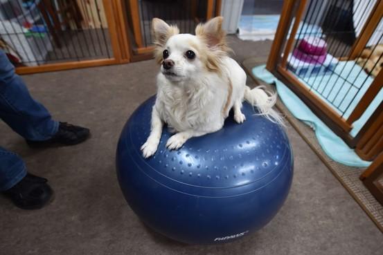Lý giải nguyên nhân số lượng chó tại Nhật giảm mạnh