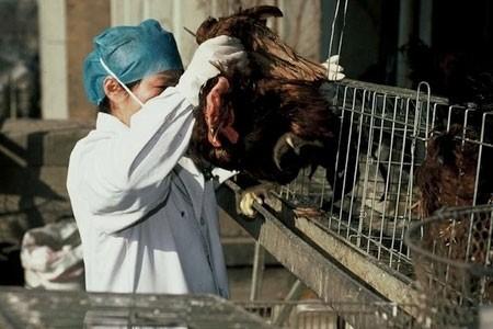Ca nhiễm H7N9 đầu tiên tại phía Đông Trung Quốc