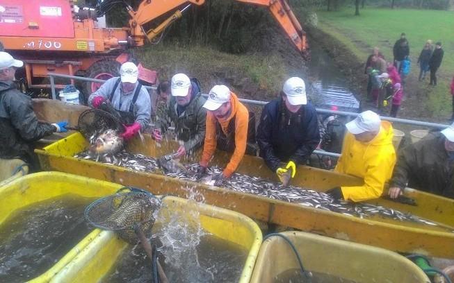 Khám phá lễ hội cá tại Đức