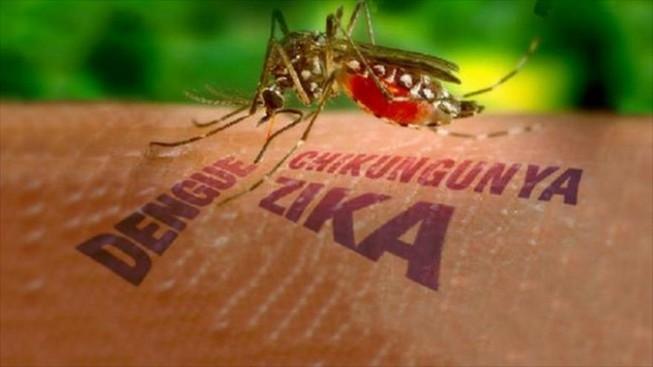 Cách điều trị và phòng ngừa bệnh do virus Zika