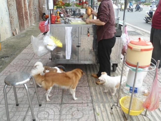 Ở TP.HCM, chó thả rông rất nhiều