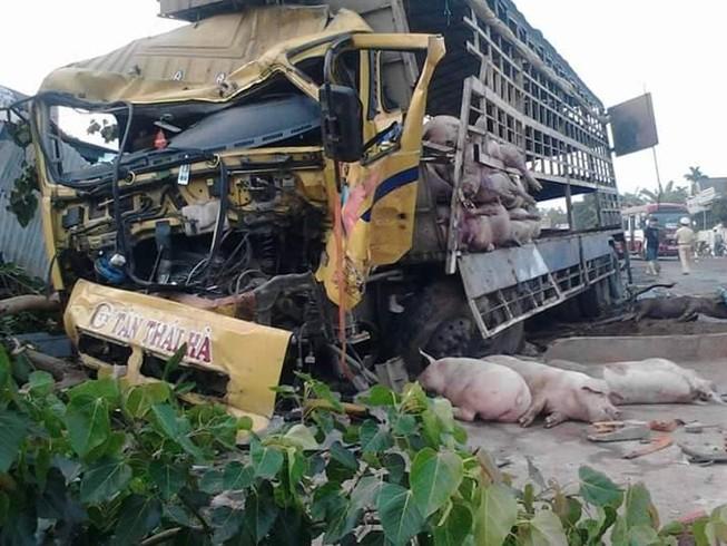 Chùm ảnh: Gần 100 chú heo nằm chết la liệt sau vụ tai nạn