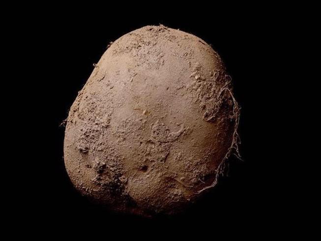 Bức ảnh củ khoai tây trị giá một triệu euro