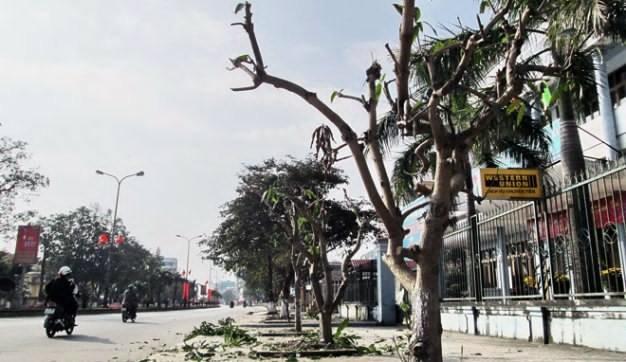 Điện lực Tân Bình rút kinh nghiệm việc mé nhánh cây