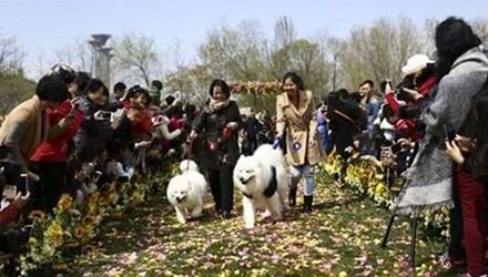 Đám cưới tập thể dành cho những chú chó cưng