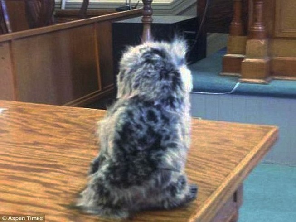 Bị cáo tới tòa xét xử với luật sư bào chữa là... con cú bông