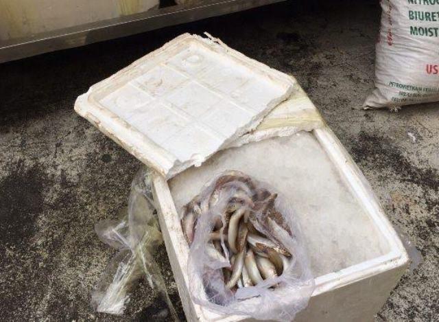 Bắt xe khách chở cá nghi nhiễm độc vào TP.HCM tiêu thụ